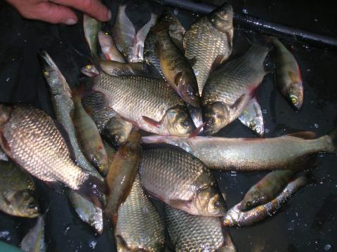 Большую долю вылова рыбы (до 80%) осуществляет население района.